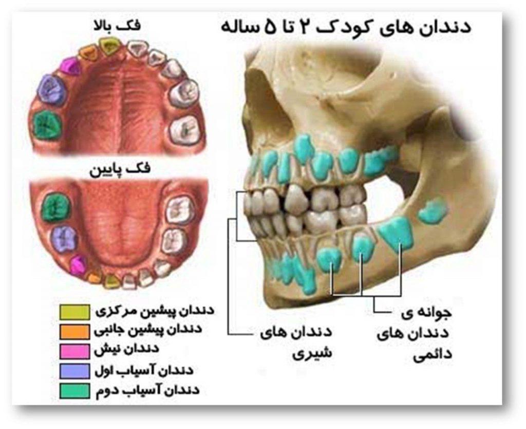 اهمیت دندان شیری